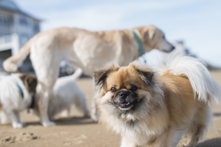 dogs, brian, delilah, tengo-3773