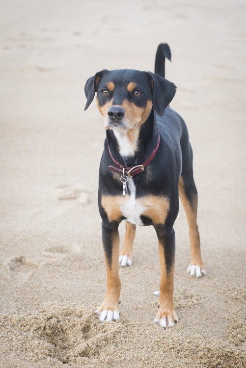 dogs, brian, delilah, tengo-3790