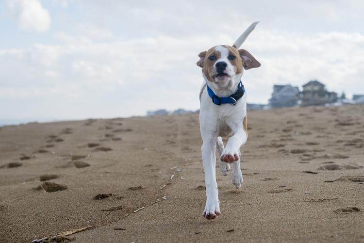 dogs, brian, delilah, tengo-3799