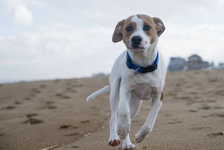 dogs, brian, delilah, tengo-3800