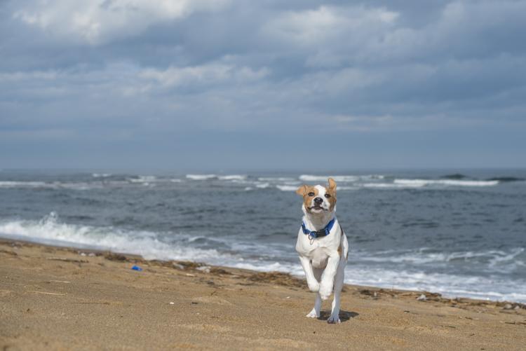dogs, brian, delilah, tengo-3811