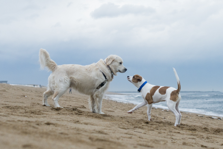 dogs, brian, delilah, tengo-3854