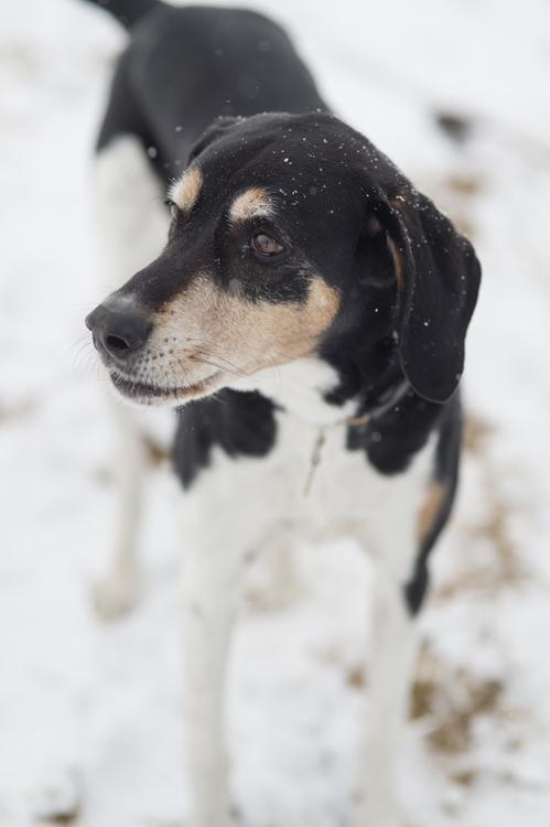 dogs, brian, delilah, tengo-8692