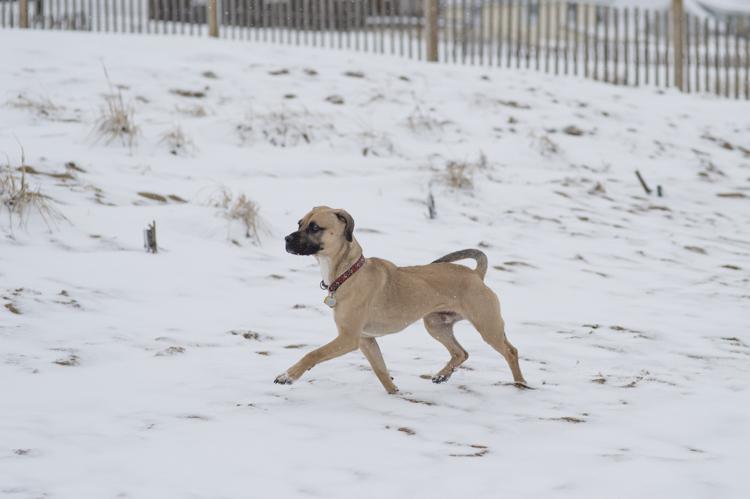 dogs, brian, delilah, tengo-8693