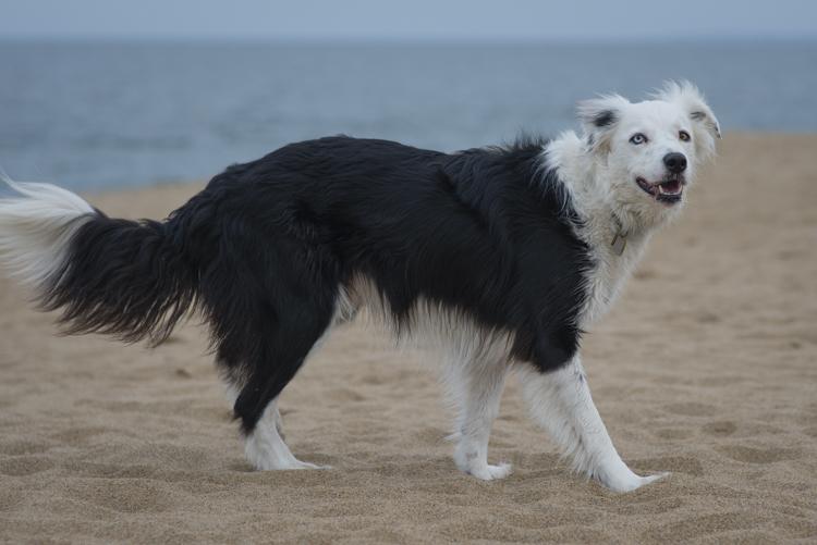 dogs, sammy, mickie, maggie-3605