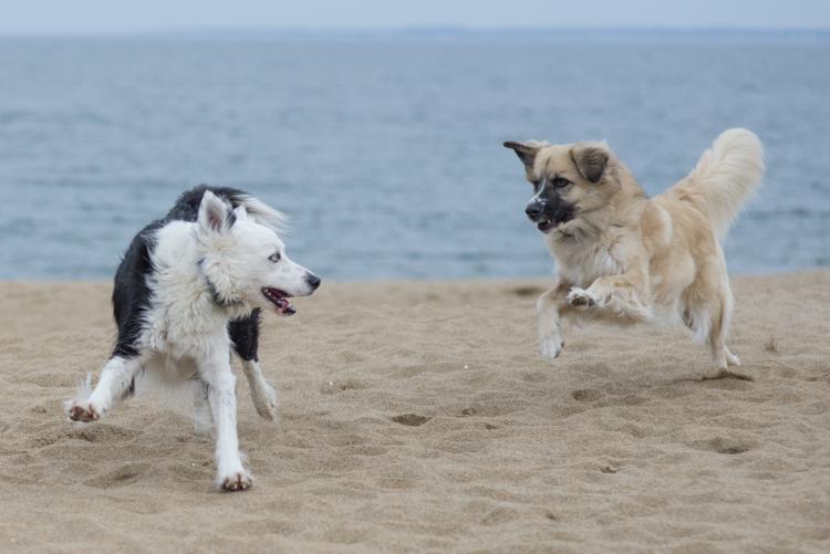 dogs, sammy, mickie, maggie-3615
