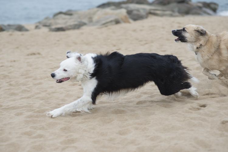 dogs, sammy, mickie, maggie-3620