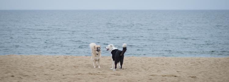 dogs, sammy, mickie, maggie-3624