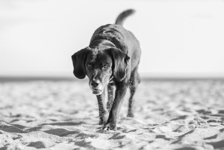 dogs, sammy, mickie, maggie-3691