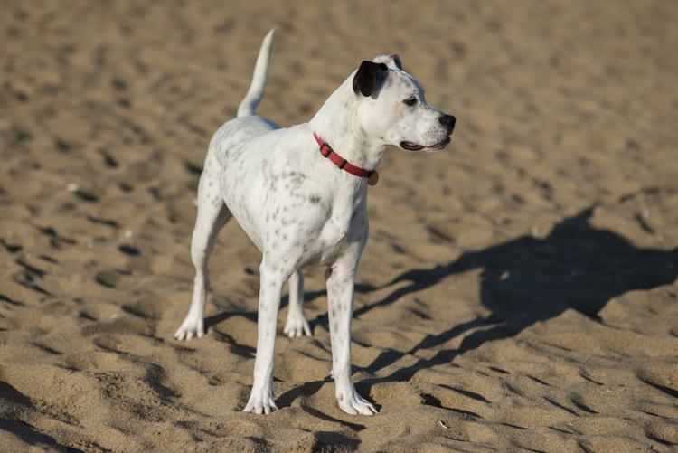 dogs, sammy, mickie, maggie-3706