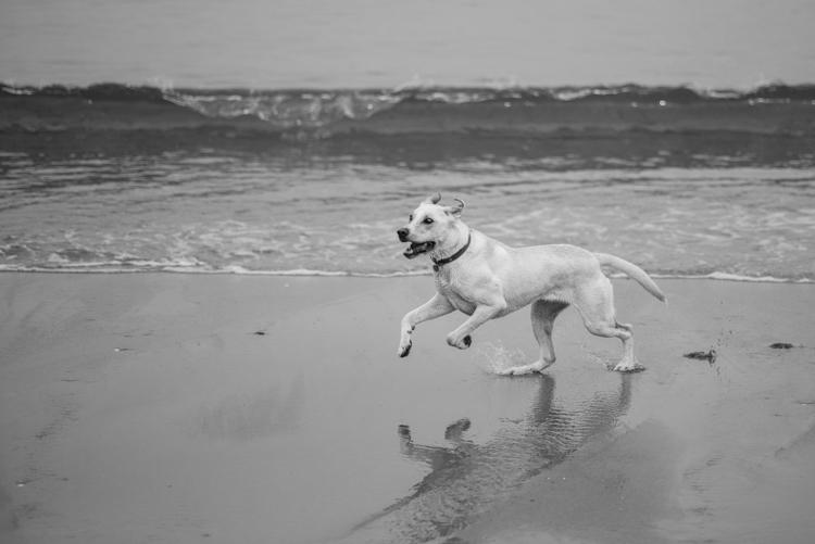 dogs, abby, ollie, -5550