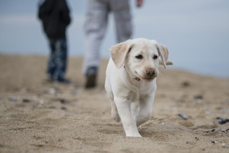 dogs, abby, ollie, -5564