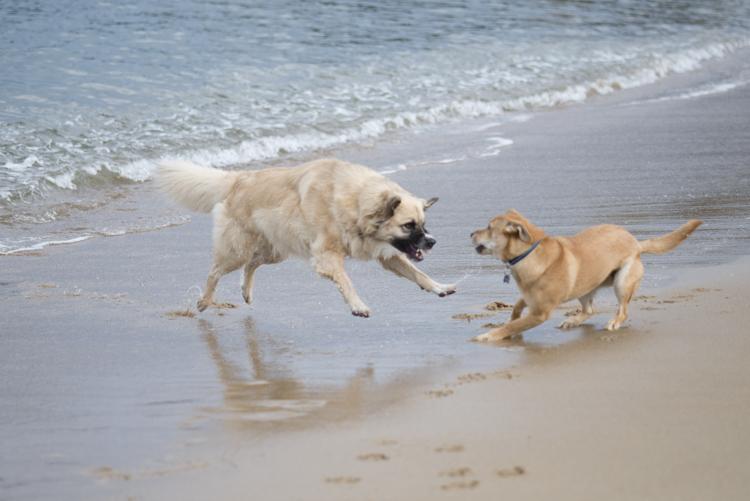 dogs, abby, ollie, -5588