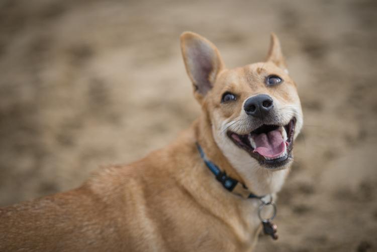 dogs, abby, ollie, -5592
