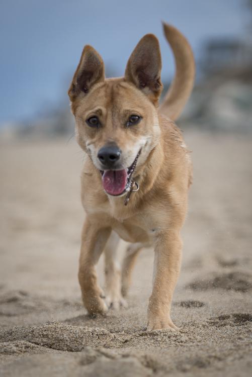 dogs, abby, ollie, -5606
