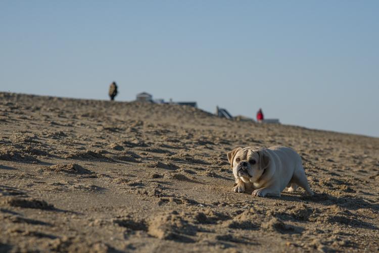 dogs, eddie, monte, -5445