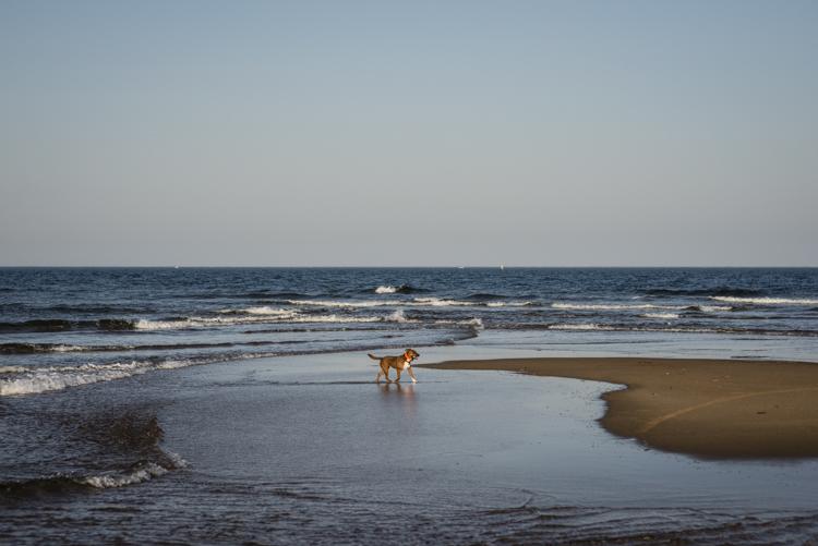 dogs, eddie, monte, -5467