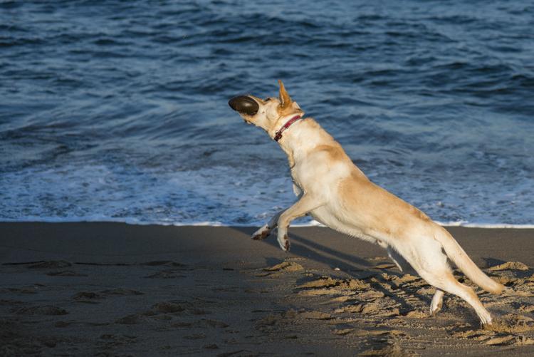 dogs, eddie, monte, -5513