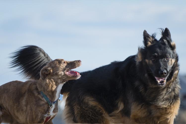 dogs, fenway, rocky, liza, -8411
