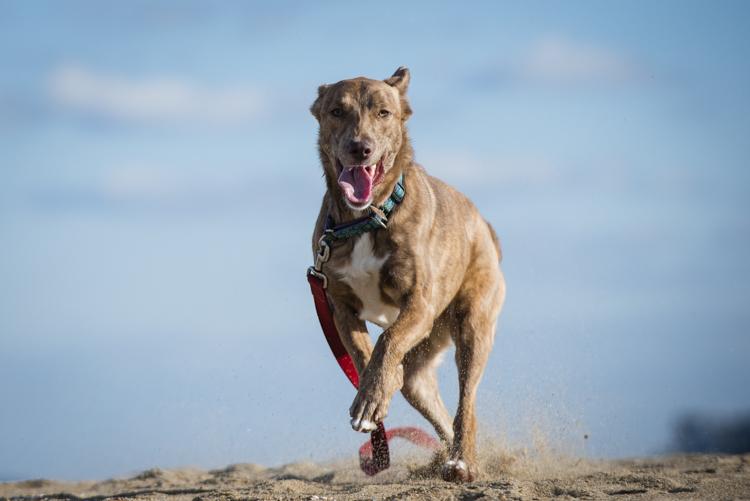 dogs, fenway, rocky, liza, -8416