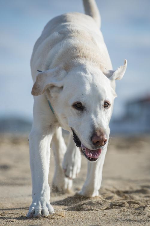dogs, fenway, rocky, liza, -8433