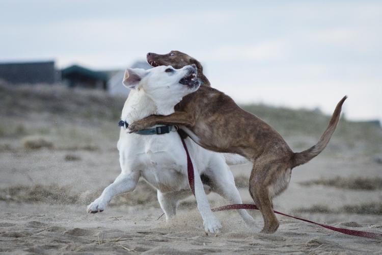 dogs, fenway, rocky, liza, -8447