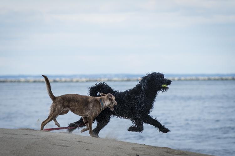dogs, fenway, rocky, liza, -8450