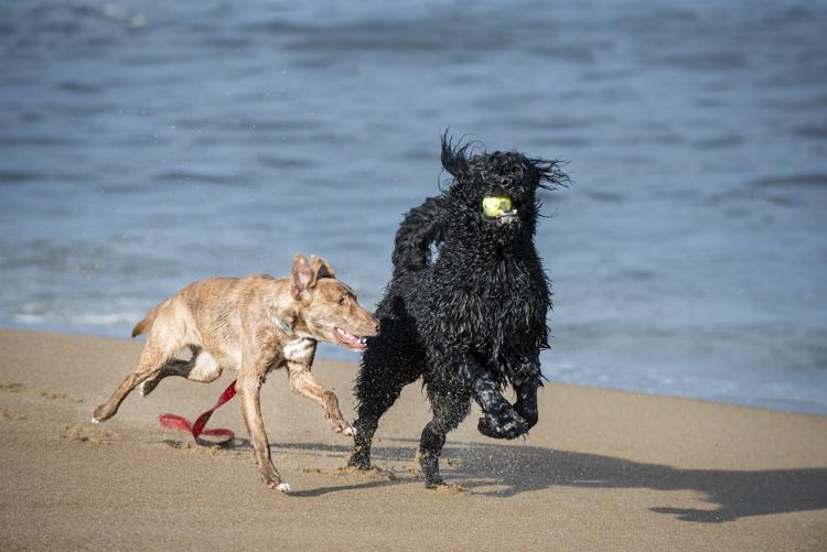 dogs, fenway, rocky, liza, -8472