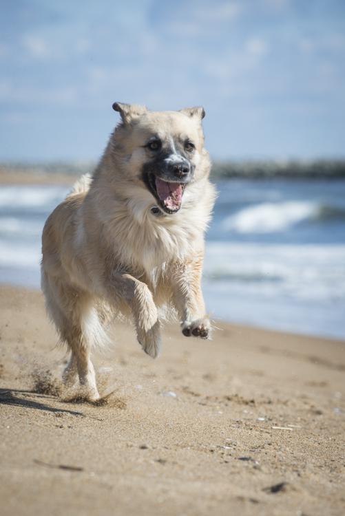 dogs, fenway, rocky, zephyr-8195