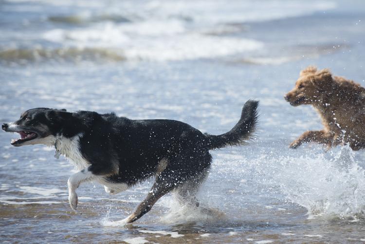 dogs, fenway, rocky, zephyr-8245