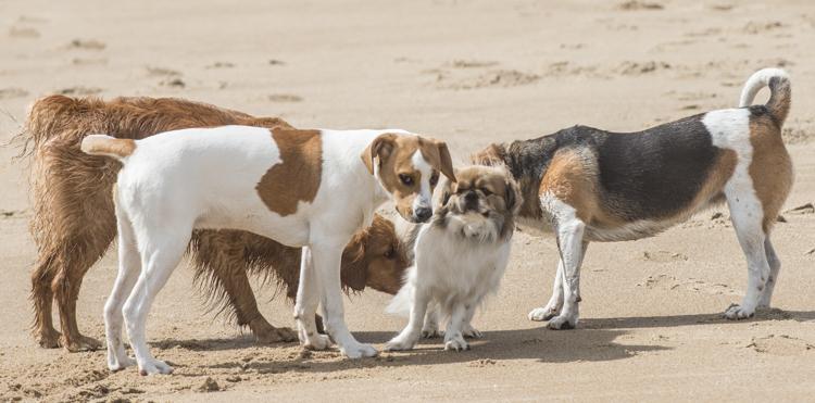dogs, fenway, rocky, zephyr-8295