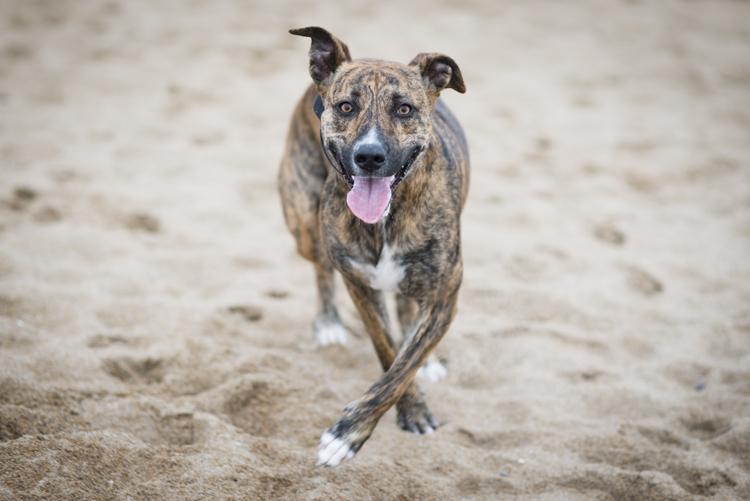 dogs margo-4935
