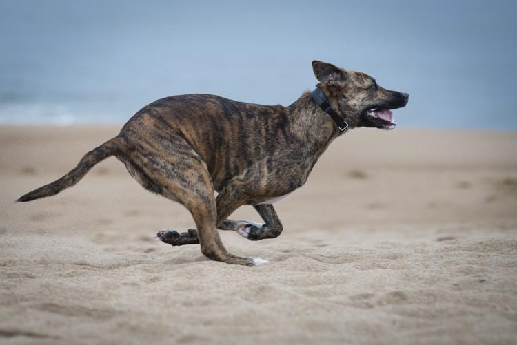 dogs margo-4940