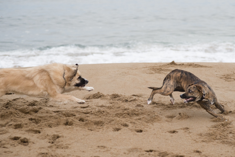 dogs margo-4966