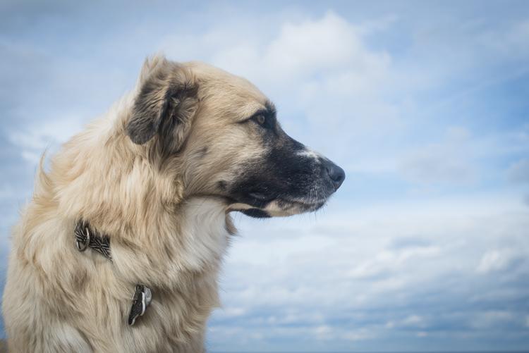 dogs, mia, stella, adonis-6852