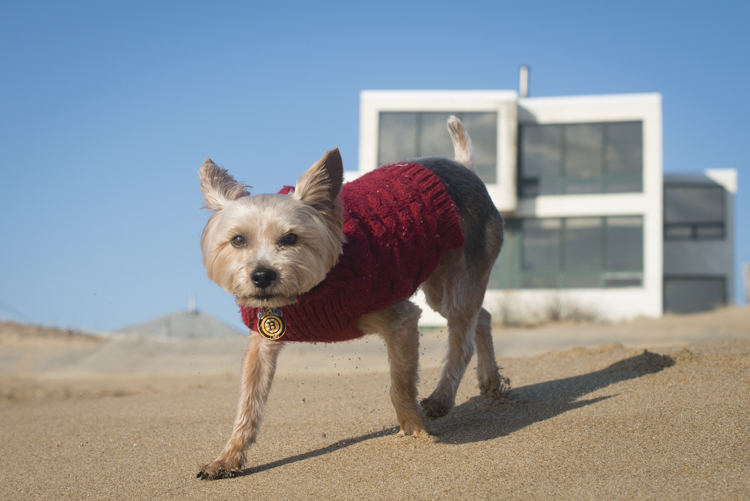 dogs, mia, stella, adonis-6862