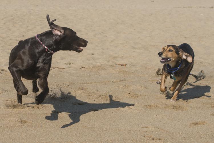 dogs, mia, stella, adonis-6920