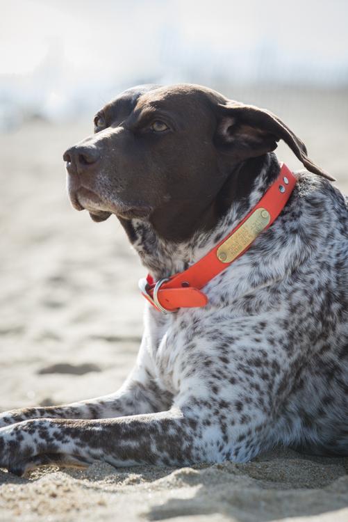 dogs, plum island-6981