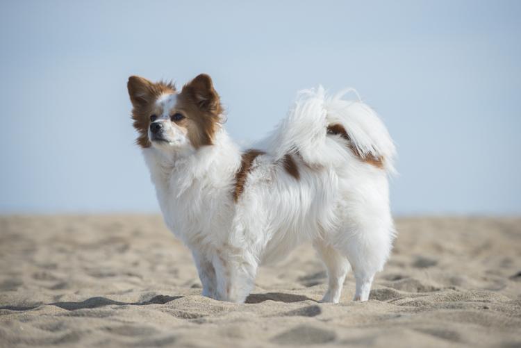dogs, plum island-6998