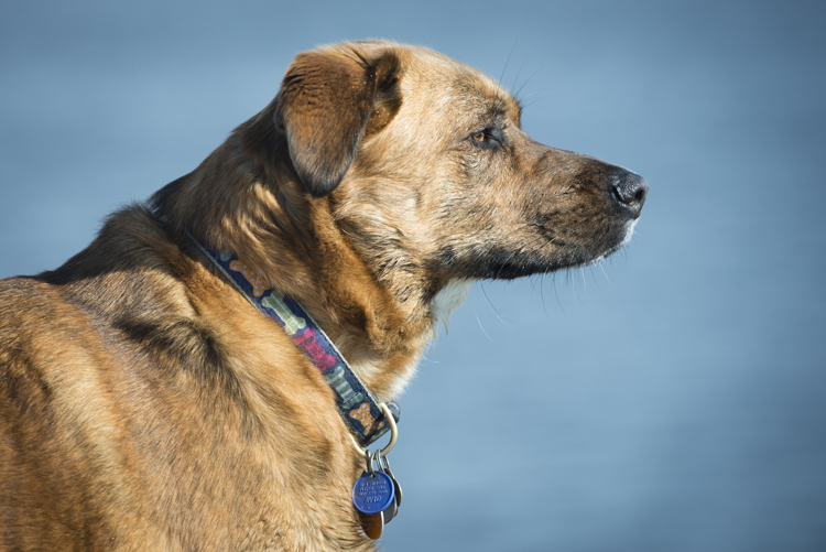 dogs, plum island, fenway, rocky, ellie-7917
