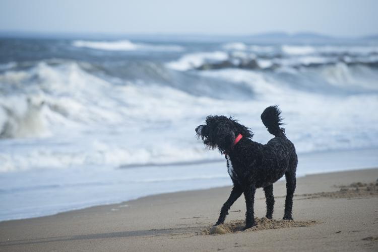 dogs, plum island, fenway, rocky, ellie-8041