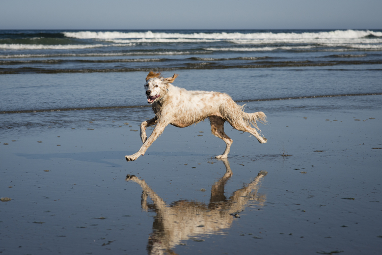 pippa on jenness beach...amazing dog!!!