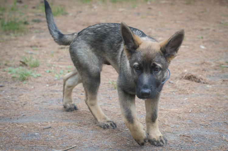 dogs kieser lucy-9894