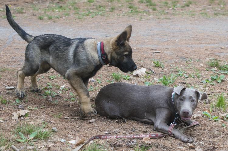 kieser and layla