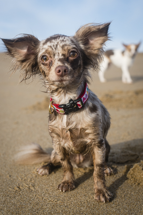 dogs, mia, clara, neko,roscoe, sadie-8877