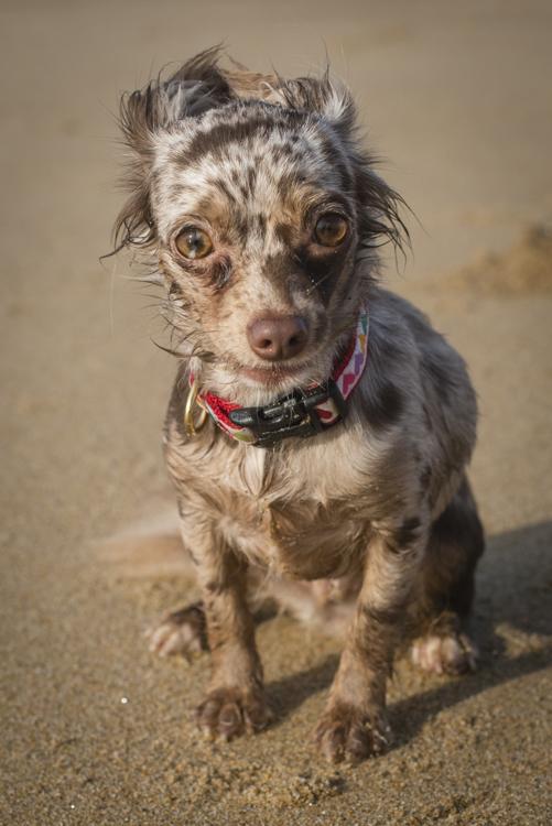dogs, mia, clara, neko,roscoe, sadie-8881