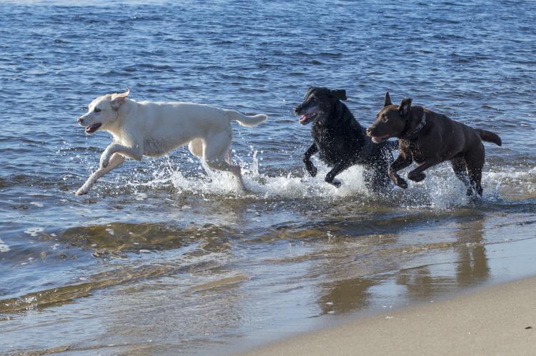 dogs, ellie, pepper, -3843
