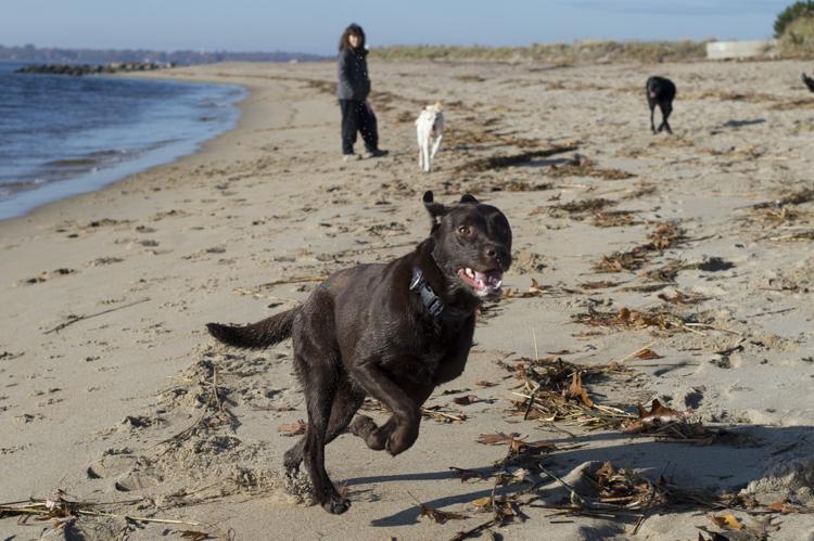 dogs, ellie, pepper, -3873