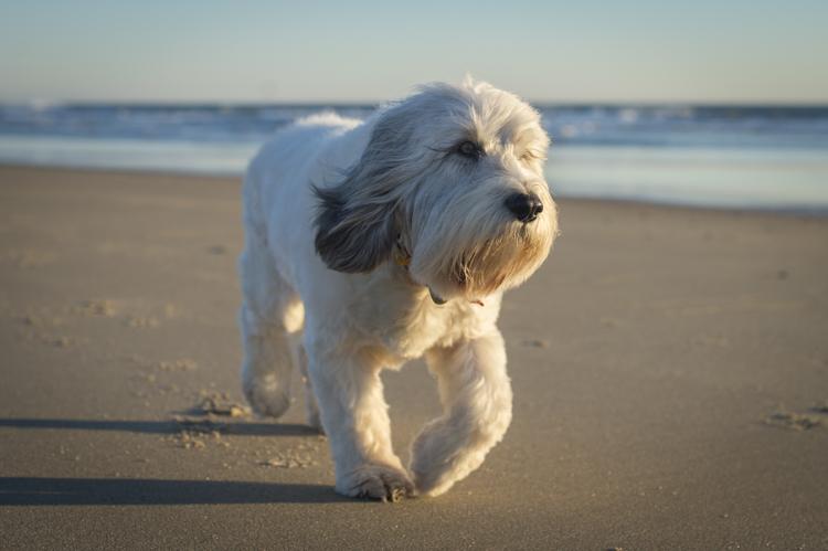 dogs salisbury spirit-3556