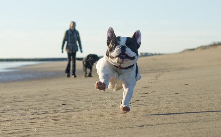 dogs salisbury spirit-3591